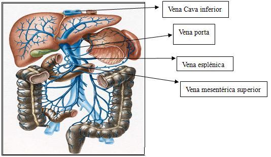Nosotros portal hipertensión ascitis