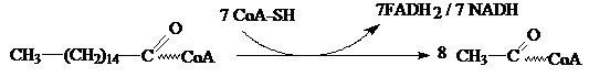 degradación por beta-oxidación