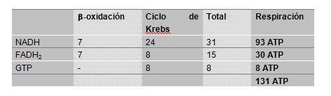 Obtención por la beta-oxidación y el ciclo de Krebs