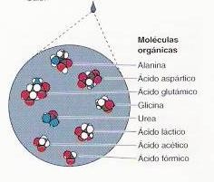 Miller: síntesis de monómeros biológicos