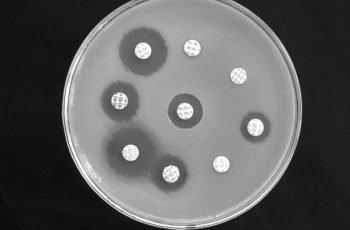 disco-antibiotico