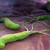 microorganismo helicobacter