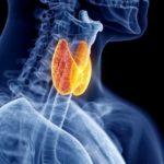 La tiroides, produce aumento o pérdida de peso